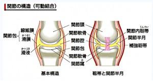構造関節の