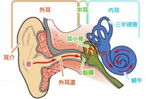 めまいー耳の構造ー2